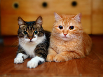 Польза от кошек
