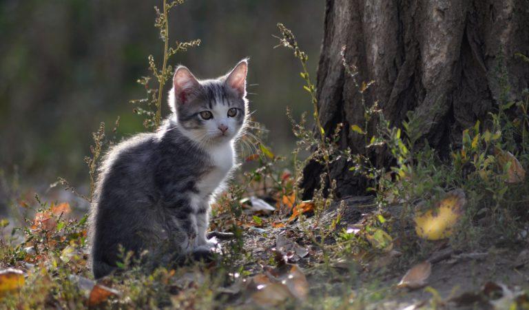 Как вытащить клеща у кошки?
