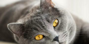 Кот ровесник