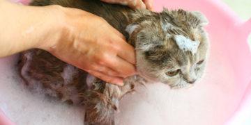Мыть котенка
