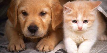 Подружить пса с котом