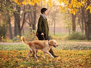Как правильно выгуливать собаку по закону в России?