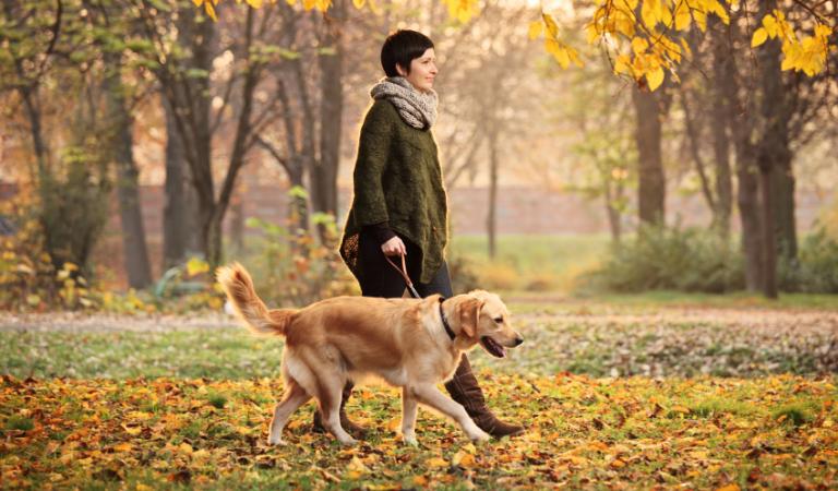 Как правильно выгуливать собаку по закону в России в 2019 году?