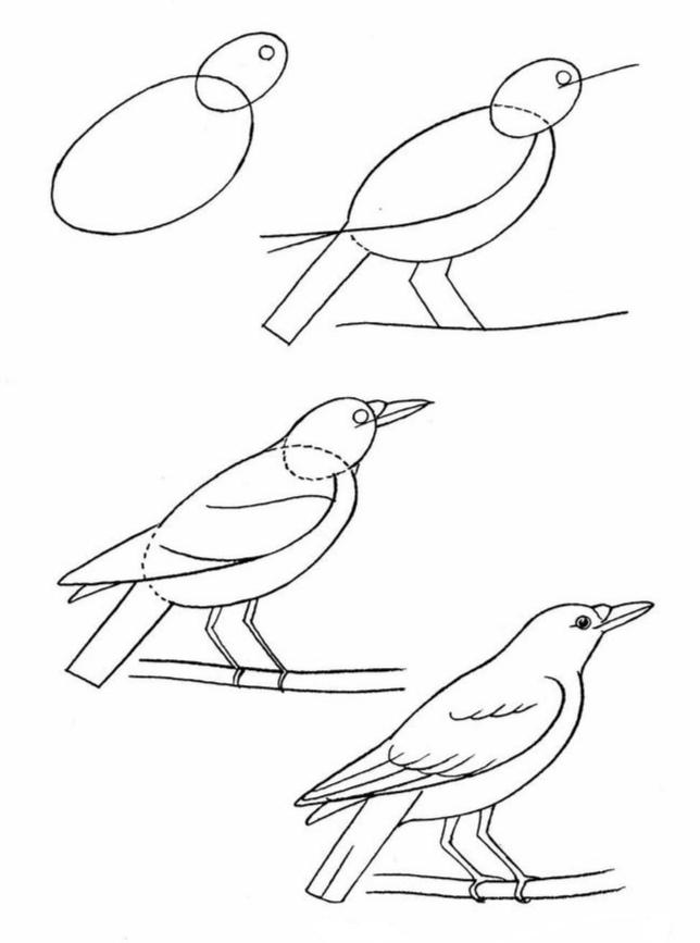 Как просто нарисовать птицу?