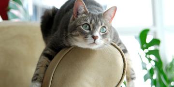 Что делать, если кошка хочет кота?